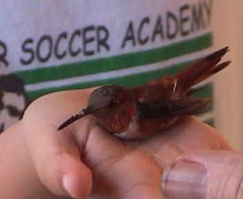 Rufous Hummingbird     and Benjamin     November 2003