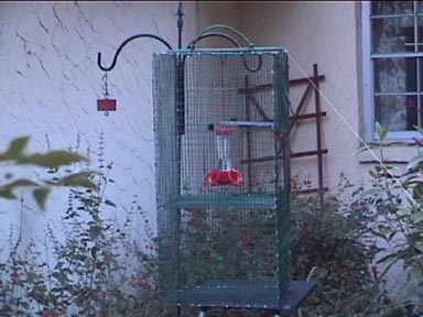 Trap used to capture 2 Rufous Hummingbirds    November 2003